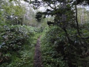 2014-08-9_16_二ペソツ山・石狩岳・オプタテシケ山 0118